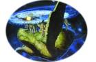 Kaplumbağanın sırtındaki dünya