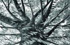 Bilge bir ağacın gözünden insanların hikâyesi